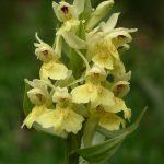 ruta senderismo orquídeas casteret