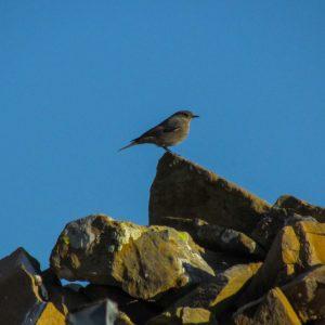 miradores-ordesa-aves